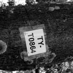 DSCN1931